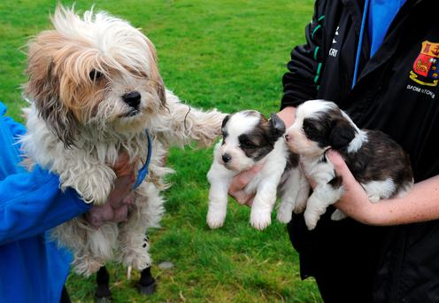 Dogs stolen from Kennedy's pet farm in Killarney