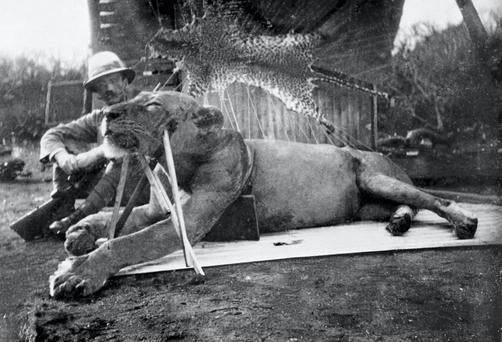 Soldier and engineer Lt. Colonel John H Patterson (1867 - 1947) as he poses with the propped up body of the first of two maneating lions he shot and killed near the Tsvaro river, Kenya, late 1890s