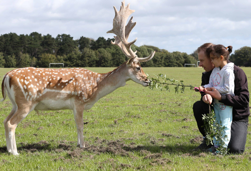 Jonathan and Megan Daly from Lucan get to meet one of the deer in Dublin's Phoenix Park Photo: Sasko Lazarov