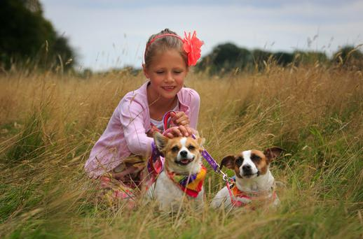 Libby McKinley 8 from Cabra with Sammy & Lizzy jack Russells at the Phoenix Bark in the Park sponsored Dog walk at the Phoenix Park, Dublin.