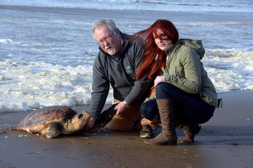 Marine biologists Dr Kevin Flannery and Dr Grace Flannery with the young loggerhead turtle which was washed up at Carnsore Point. Photo: Don MacMonagle