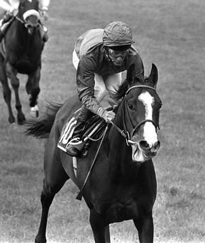 Shergar, possibly the most valuable race horse in history, was stolen from Ballymany Stud in Kildare by the IRA in February 1983 and never seen again