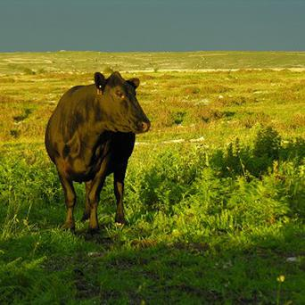 Livestock emissions, such as methane, are exempt.