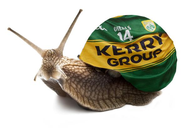 What a 'Kerry snail' might look like