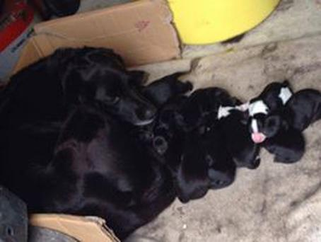 Seven of the pups were put down by the charity