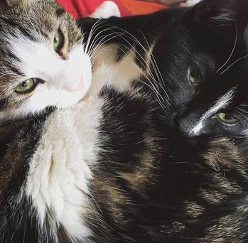 Cats Kali and Shiva have been evicted from their homes Photo: Phibsboro Cat Rescue