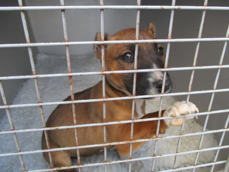 The eight-week-old puppy was removed by the ISPCA