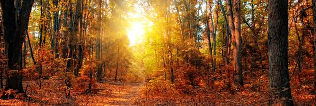 Golden brown: A classic autumn scene, but October was remarkably warm and extremely dry with every garden and woodland boasting trees in full colour. Inset right, our keen green-fingered columnist Gerry Daly