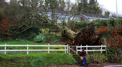 A family in Drumalee, Cavan, had a very lucky escape after a tree fell in the garden of their home. Photo: Lorraine Teevan