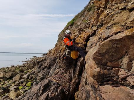 Marley, the golden retriever, is rescued from the cliffs at Sutton. Photo: Howth Coast Guard