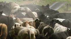 Emissions rose by 2.7pc in agriculture, driven primarily by higher numbers of dairy cows