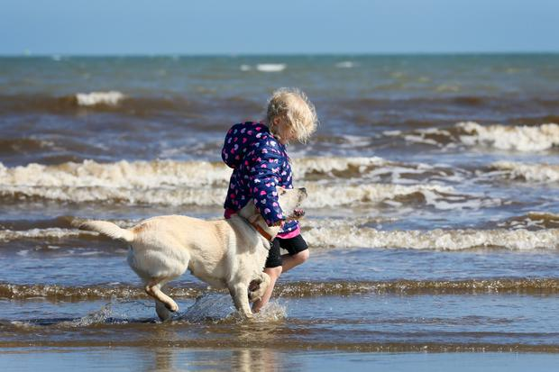 Five year old Dervla Duffy from Clontarf pictured with her dog Kali a two year old Labrador, as they paddle in the sea at Dollymount strand.Picture Credit: Frank Mc Grath