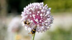 Scientists will probe the reasons bee populations have been under pressure