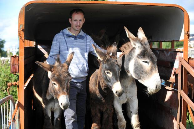 Eamonn O'Connor from Killorglin selling his donkeys at Puck Fair. Picture: MacMonagle