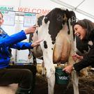 Ryan Tubridy gets all country as he tries to milk a cow with the assistance of Caitriona Mullin from Mountbellew in Galway at the Volac/IHFA stand. Picture; Gerry Mooney