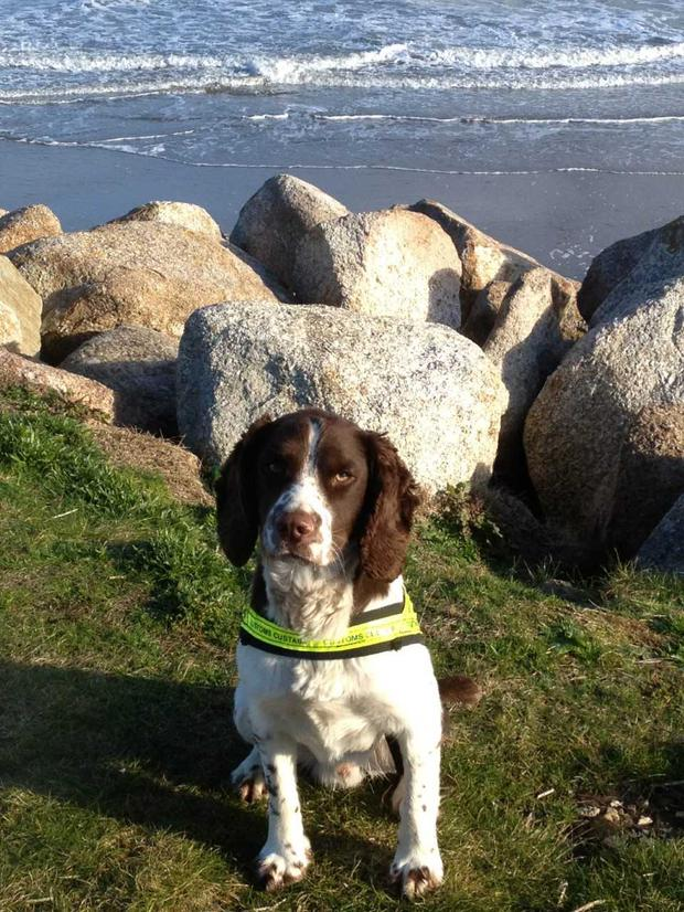 Detector dog Defor helped with the seizure