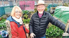Green fingers: Conn and Dymphna Cooney have used their allotment in Weaver Square for eight years. Photo: Justin Farrelly