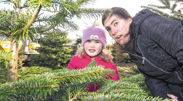 Critical eye: Emilia McCrea (4), from Knocklyon in Dublin, with her mum Samantha, looking for the perfect Christmas tree at Kelleher's farm near Naas, Co Kildare. Photo: Colin O'Riordan