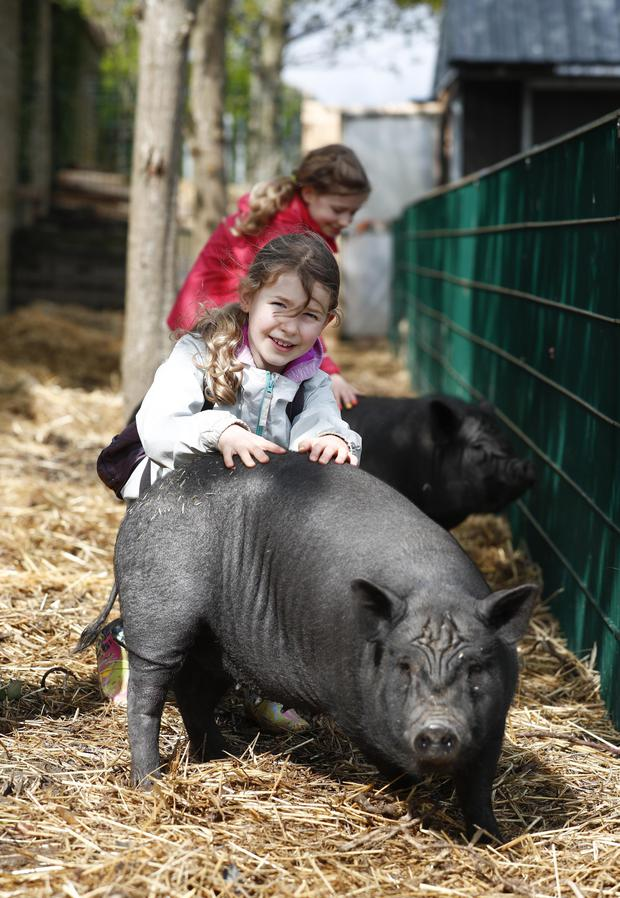 Twins Lynn and Ella Spitzer Beirne (10) with Ash and Will, the pot bellied pigs.