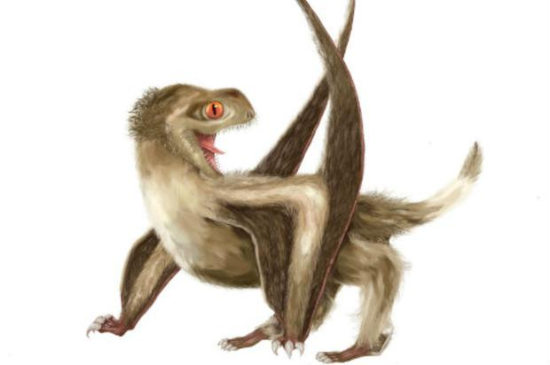 In fine feather: Dinosaurs are now known to have developed feathers 250 million years ago, probably for warmth, many ages before birds emerged