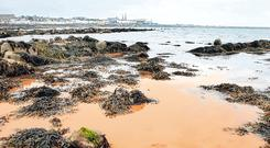 Spillage: Algae allegedly discoloured water at Sandycove in Dublin. Photo: Steve Humphreys