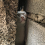 Daisy the cat became wedged between cement bricks