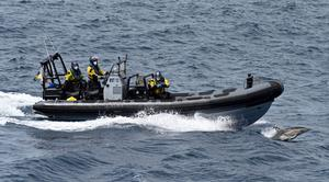 An armed team in a high-speed rhib, accompanied by a dolphin, head off to inspect a suspect vessel. Photo by David Jones