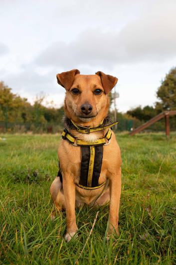 Bella the tiny terrier. Photo: Dogs Trust