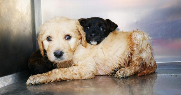 The puppies have been named Summer and Solero