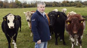 MASSIVE LOSS: Farmer James Conroy, who had an estimated €8,000 worth of cattle stolen from his farm in the early hours of Monday, October 21