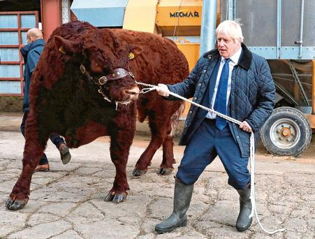 British Prime Minister Boris Johnson leads a bull around a pen as he visits Darnford Farm in Banchory near Aberdeen. Photo: Getty