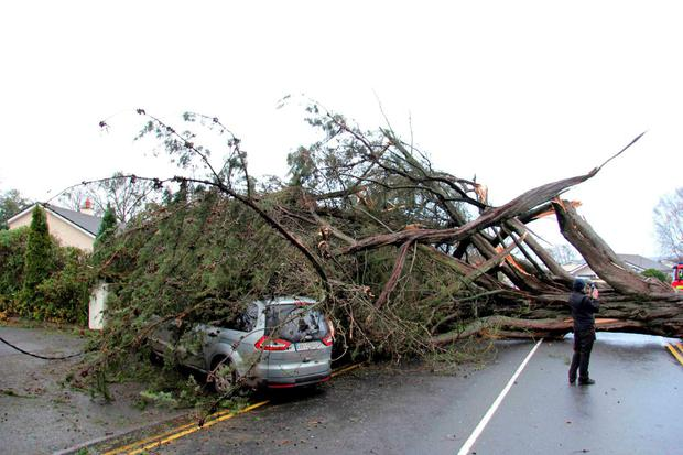 A car lies under a fallen tree on Block Road in Portlaoise. Photo: Tim Keane.