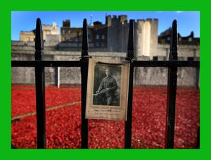 A photograph of Corporal Thomas William Belton, who died in Belgium in World War One at the age of 25, is placed on railings surrounding the 'Blood Swept Lands and Seas of Red' installation in the moat of the Tower of London. Photo: Getty Images
