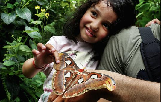 Stutie Rana (3) and dad Naveen from Greenhills in Dublin look at a Giant Moth.