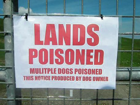 Poison: Warning signs have been posted along the River Shannon at Clonlara in Co Clare.
