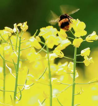 Bees continue to be under threat – and one of the main reasons why is the decline in flowers.