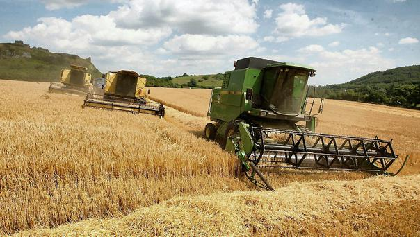 With so much barley in the country, Helen Harris can't see how the prices will get any better.