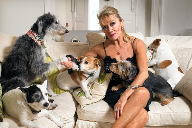 Twink (Adele King) and her dogs, minus the missing Teddy Bear Photo: Tony Gavin