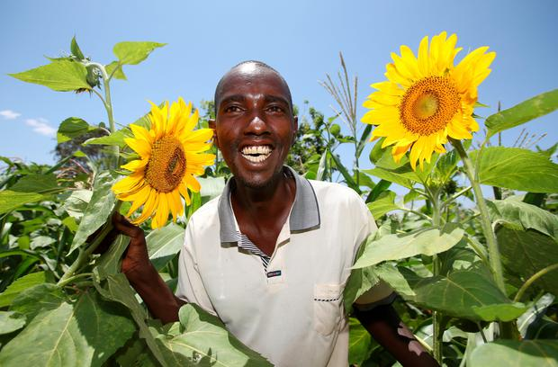 Farmer Mugendi Gachembe pictured with some of his crop of Sunflowers at his farm in the Kabuburu district of Kenya. Mugendi farm recieves water for irrigation from the Trocaire sponsored Gitogo Kamaindi Water project. Photo: Frank McGrath.