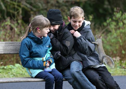 A squirrel says hello to Aisling Browne (6) and her cousins, Eoghan (10) and Darragh (12) McGough in the botanic gardens in Glasnevin, Dublin, yesterday. Photo: Damien Eagers