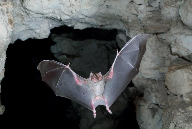 The Government is to spend more than €250,000 on a new scheme to monitor Ireland's bats
