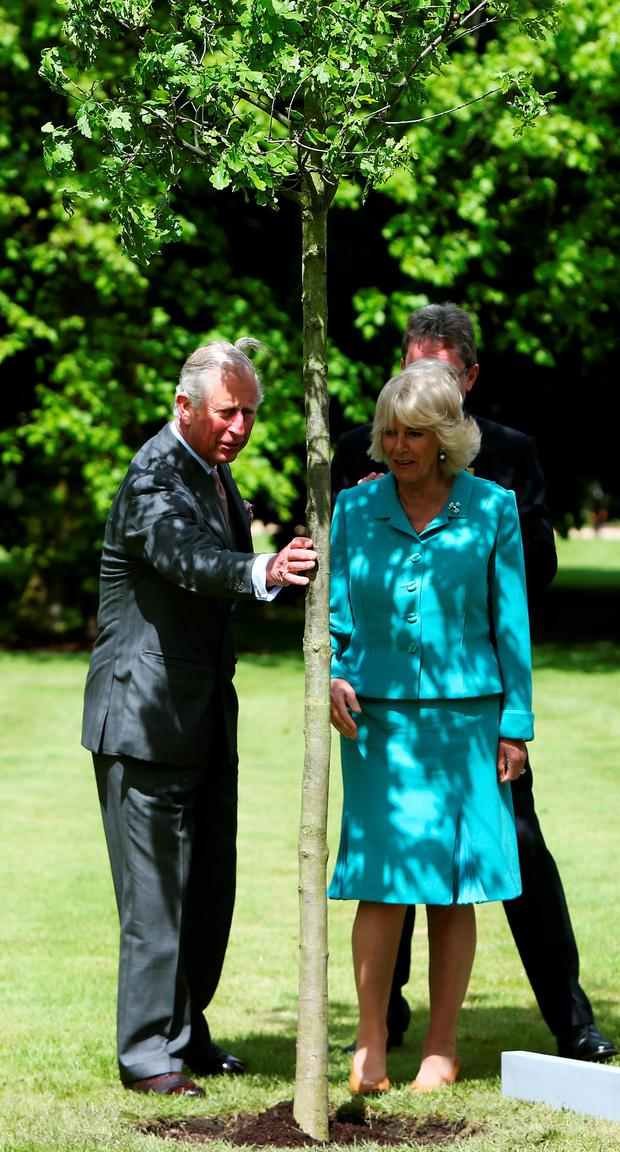 Prince Charles and Camilla plant an oak tree at NUI Galway