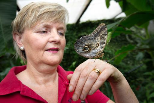 DIVING BELL: Iris Fox, co-founder of the Straffan Butterfly Farm, demonstrates one of the exotic butterflies. Photos: Tony Gavin
