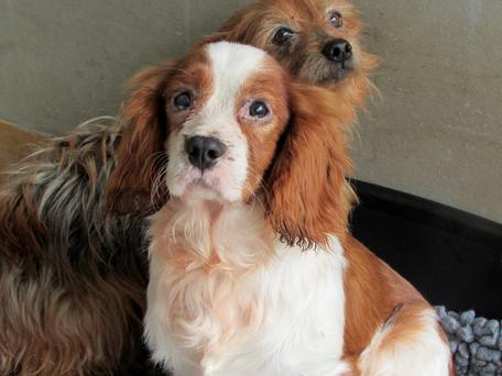 Some of the dogs that were rescued from the Co Carlow farm after an 11-day operation in April