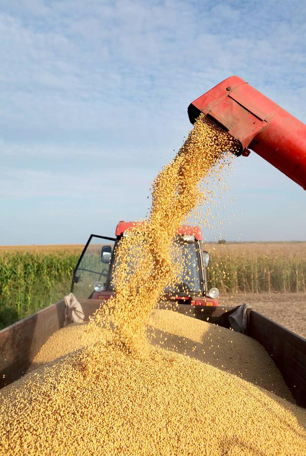 The weather has led to record grain yields