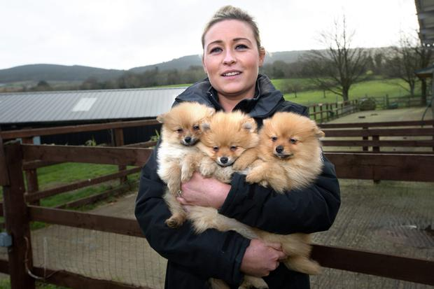 DSPCA Rescue Centre helper Jenny Cremin holds some of the 18 pups siezed at Dublin Port