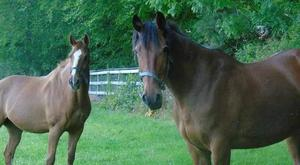 Two horses were left with gashes in their body after horror axe-attack. Photo: William O'Toole