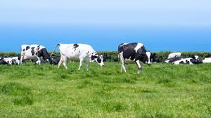 Methane emissions increased by almost 20pc per dairy cow over the last 30 years, according to the EPA. Photo: Stock image