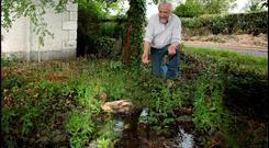 DUCK AND LEAK SOUP: Willie Kealy displays the water leak which has become a home for his duck