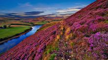 Heathers are a wonderful species, suited to many parts of Ireland.